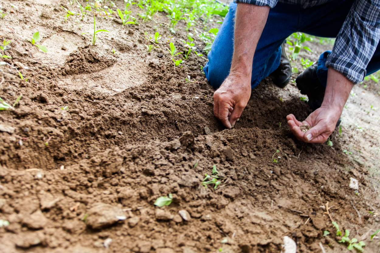 man-planting-plant-169523